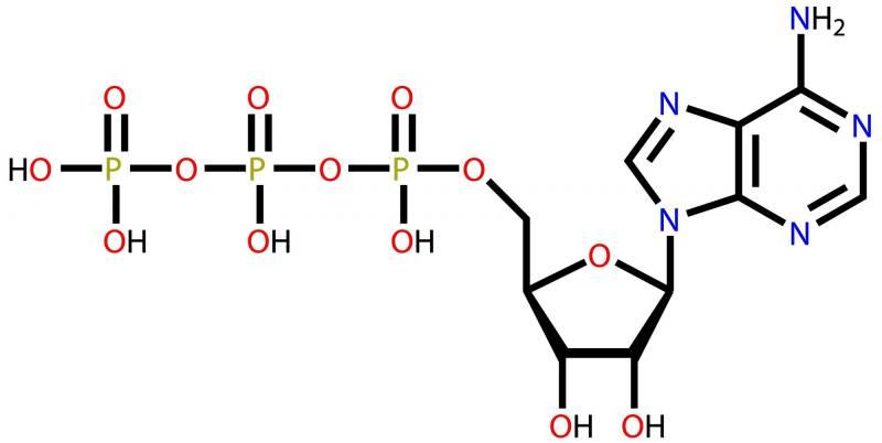 Fitness power molecule