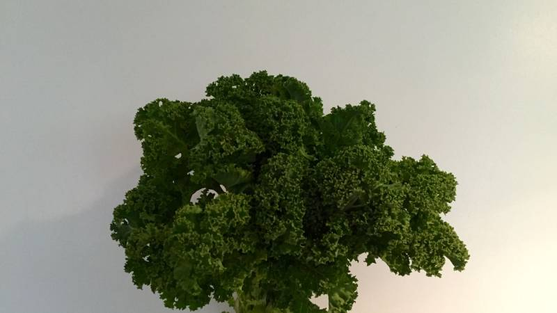 Kale - food for health